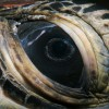 Green Turtle eye