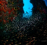 Reef Life - Indonesia
