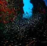 Reef Life - Indonesia