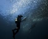 Sardine Run - South Africa