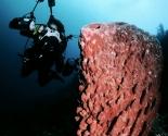 Sponge - Wakatobi