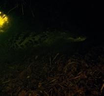 Crocodile' s Cave