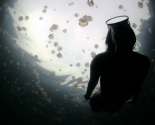 Jelly - Fish Lake