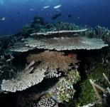 Seascape - Wakatobi