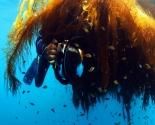 Kelp Patch