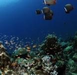 Reef Life - India
