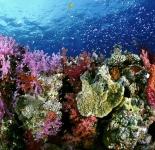 Reef Life - Fiji