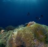 Reef Life - Tonga