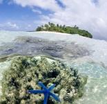Remote Island - Tonga