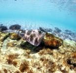 Sting Ray - Bahamas