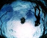 Sardines - Isla Mujeres